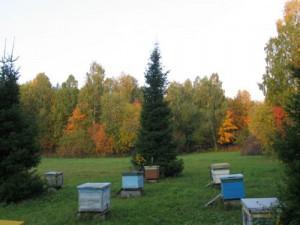 Лесная пасека с пчелами