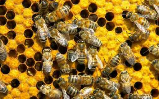 Мед поможет похудеть. Труженицы пчёлы.